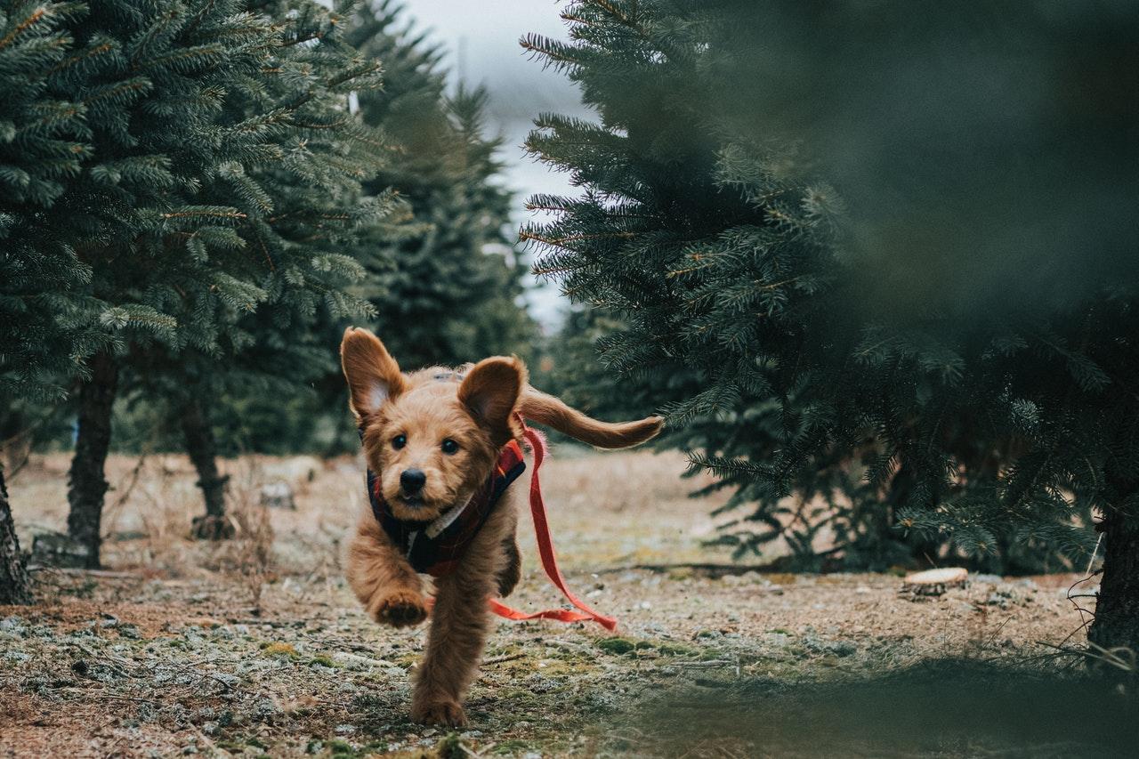 motion med hund